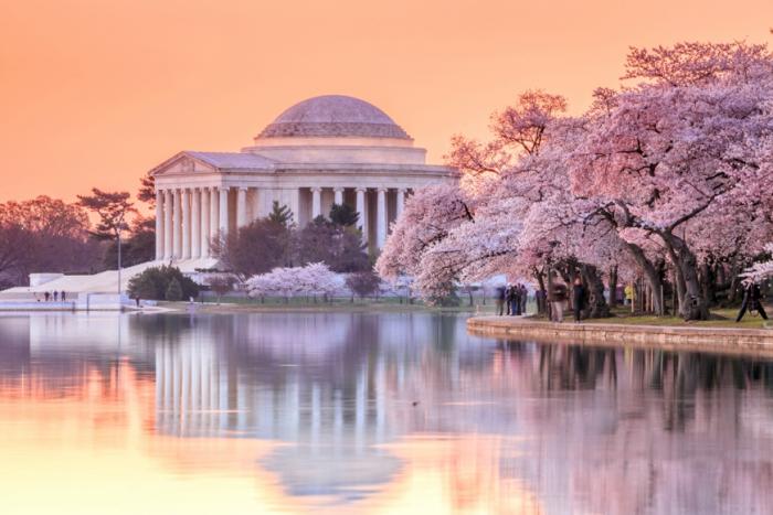 Cherry Blossom Festival – Washington D.C.