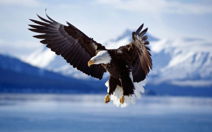 Kenai Fjords National Park, Alaska – Verenigde Staten van Amerika
