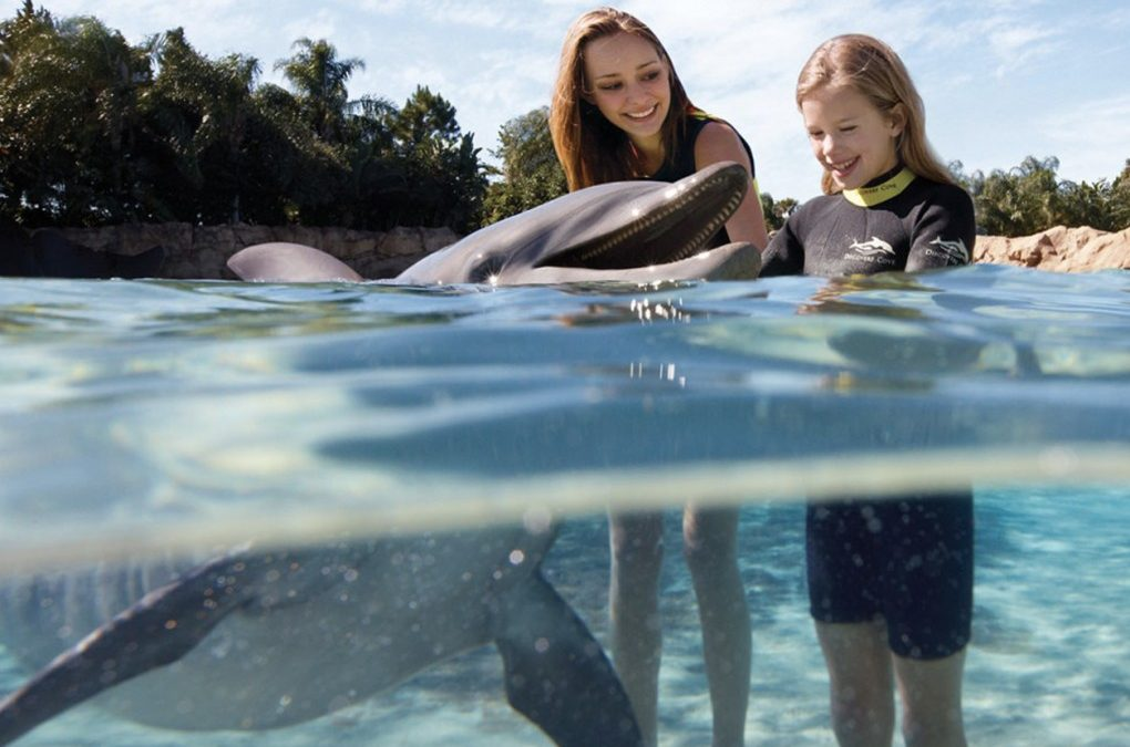 Discovery Cove – voor wie wil zwemmen met dolfijnen.